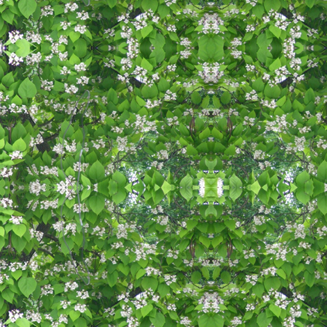 Catalpa in Bloom fabric by ravynscache on Spoonflower - custom fabric