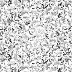 Amphipod line drawings