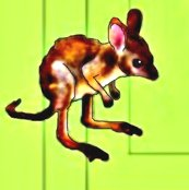 Rrrrrrrrrrbaby_kangaroo_ed_ed_ed_ed_ed_ed_ed_ed_ed_ed_shop_thumb