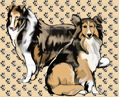 Two Sable Collies