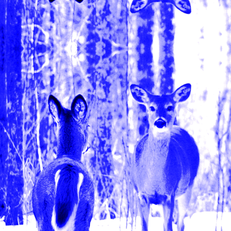 Blue Deer There and Back fabric by ravynscache on Spoonflower - custom fabric