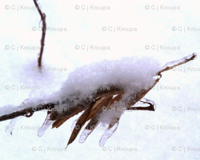 Fluffy Seed Pod Branch (natural)
