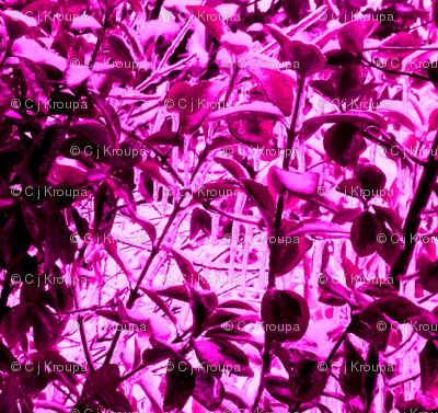 Icy Leaves (magenta)