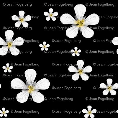 """Little Flowers in the Night"""