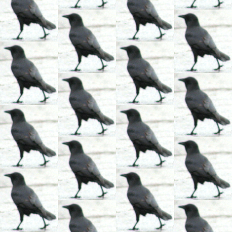 Walking Crow fabric by ravynscache on Spoonflower - custom fabric