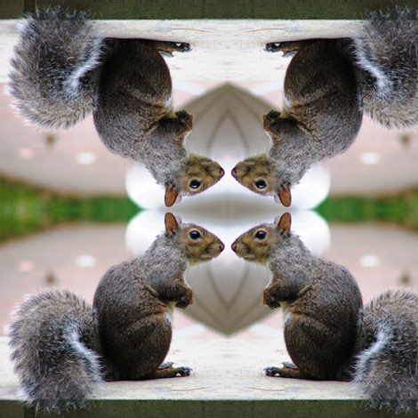Squirrel Conference fabric by ravynscache on Spoonflower - custom fabric