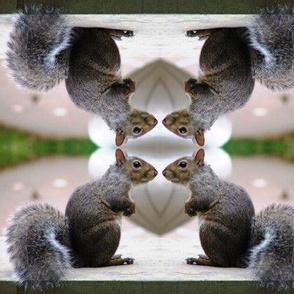 Squirrel Conference