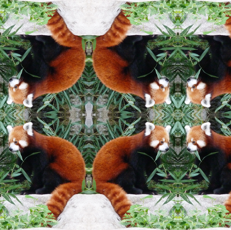 Red Panda fabric by ravynscache on Spoonflower - custom fabric