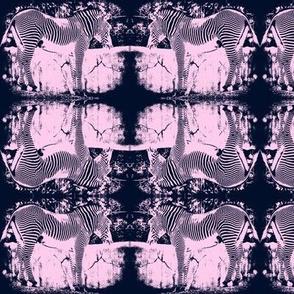 Navy Zebra
