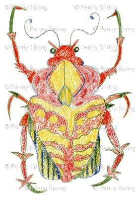 Reddish Head Beetle