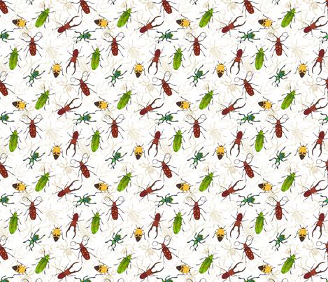 beetles fabric by marlene_pixley on Spoonflower - custom fabric