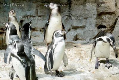 Penguin Geometric