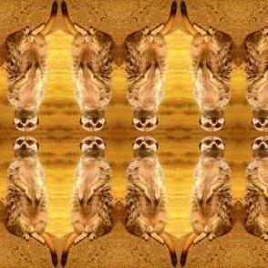 Meerkats Two