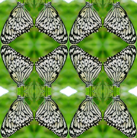Zebra Butterflies fabric by ravynscache on Spoonflower - custom fabric