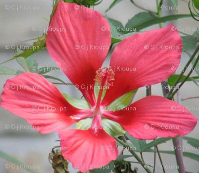 Hibiscus Lattice