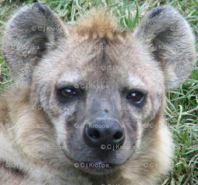 Hyena Faces