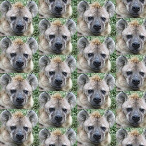 Hyena Faces