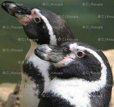 Penguin Profile