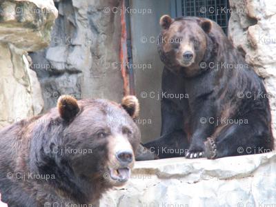 Bears Squared