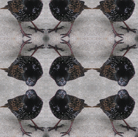 Starlings fabric by ravynscache on Spoonflower - custom fabric
