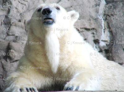 Polar Bear Stripes