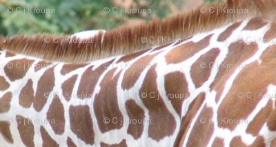 Giraffe Stripes