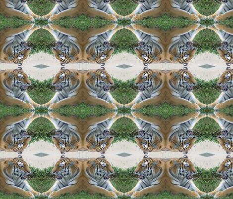 Tiger Faceoff fabric by ravynscache on Spoonflower - custom fabric