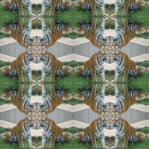 Sitting Tigers