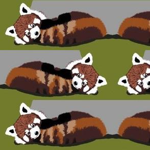 Red Panda Bears