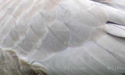 Duckwing Diagonal