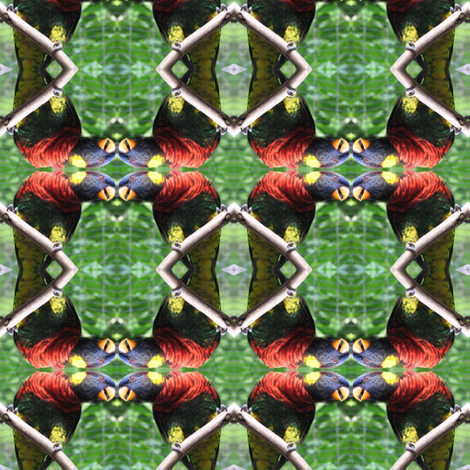 Lorikeet fabric by ravynscache on Spoonflower - custom fabric