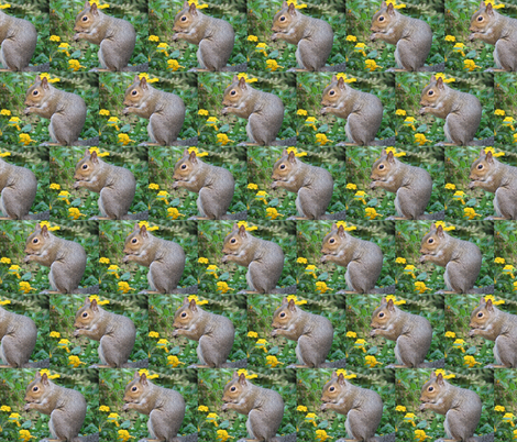 Seme' of Squirrels fabric by ravynscache on Spoonflower - custom fabric