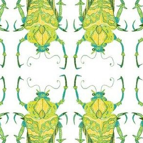Greenish Beetle
