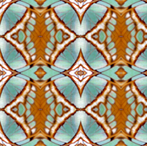 Natural Butterfly Wing Geometric fabric by ravynscache on Spoonflower - custom fabric