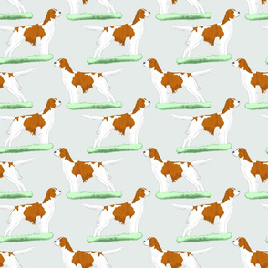 Irish red and white Setters - sky blue