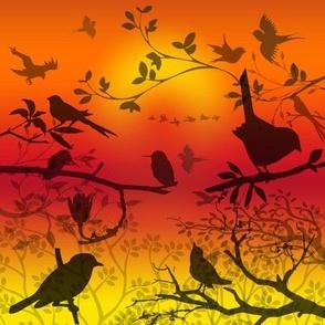 birds shadows sunset