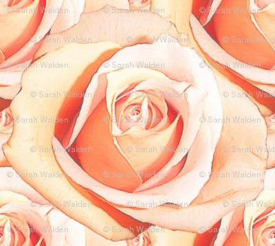Romantic Roses ~ Pale ~ Medium