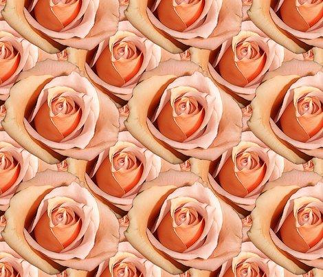 Rrlady_hamilton_roses_bright_shop_preview