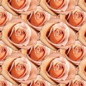 Rrlady_hamilton_roses_bright_shop_thumb