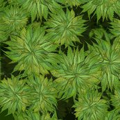 Weed_crop_scatter25_shop_thumb