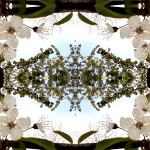 Spring blossom - 2