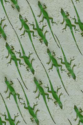 Green Lizard Lizards