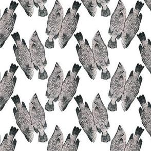 Fish in Grey