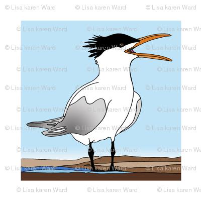 Screaming Tern