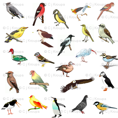 Avian Rainbow