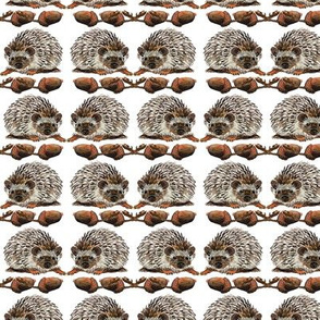 Hedgehogs and Acorns