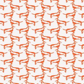 Dachshund in Orange