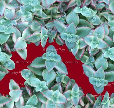 Succulent Chevron