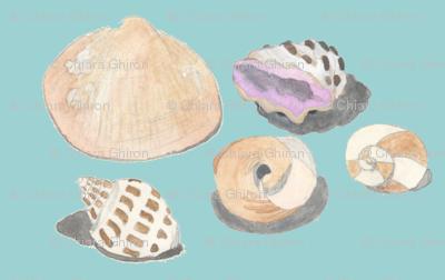 shells composition aqua background