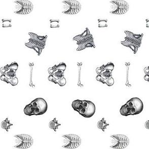 Human Skeletal Anatomy